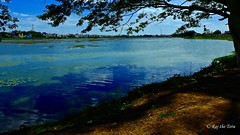 Picnic and Birding Spot! (Raj the Tora) Tags: kakkalur kakalur kakkaloor kakaloor thiruvallur thiruvalloor lake pond waterbody watershed waterlake lilylake lilypond lilytank tank watertank nature hues bluehues