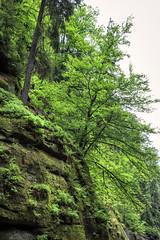 160524_154812_CB_0311 (aud.watson) Tags: europe czechrepublic bohemia decindistrict hrenska riverkamenice kamenicegorge edmundgorge gorge ravine river water rocks rockformation cliffs