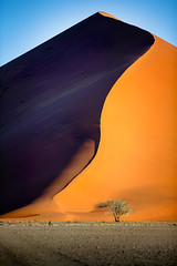 Namibian curves (lostin4tune - Thank's for a million views!) Tags: namibia niamibie sossusvlei dune desert sans sanddune sable orange landscape beauty mothernature africa amazing lonely huge tree arbre colorful colors couleurs