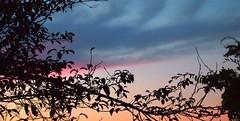 Sunset 20141006 (caligula1995) Tags: clouds plumtree sunset