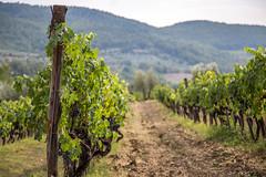 IMG_6314 (Eric.Burniche) Tags: tuscany tuscanyitaly italy toscanaitalia italia firenze firenzeitalia chianti chiantiitalia europe europa travel country countryside wine grapes vines vineyard vigna