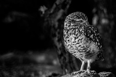 Animal3 (tarverdiphotography) Tags: 500px london uk england city wildlife animals urban animal bird reptile black andwhite white zoo beautiful canon 70200 photo photography