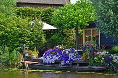 Vivere sul canale - Living on the canal (Ola55) Tags: ola55 olanda netherlands green verde canale canal dog cane italians boat barca fiori flowers kinderlijk worldtrekker