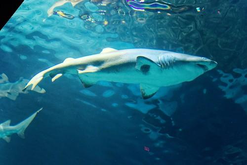 Thumbnail from Adventure Aquarium