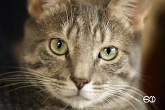 Planar 85mm 1.4 (Ney Bokeh) Tags: carlzeiss planar 85mm cy mf dof cat portrait bokeh