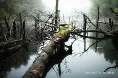 Weiher am Knigsbruch (NatureArt by Wolfgang) Tags: saarland wasser weiher see sigma dp1s bume holz nebel pilz herbst