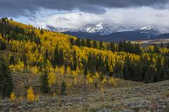 Acorn Creek (Aaron Spong Fine Art) Tags: silverthorne fall colors foliage autumn 2016 colorado gore range eagles nest wilderness frisco breckenridge acorn creek