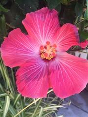 Flower (janessasalazar) Tags: settings