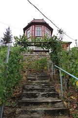Weinberghaus und steileStufen (julia_HalleFotoFan) Tags: weinbau weinbaugebiet saaleunstrut weinberg trauben winzer strausenwirtschaft freyburg