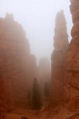 IMG_2877 (Geology Joel) Tags: fog hoodoos brycecanyon bryceamphitheater geology rocks nature nationalparks utah desert weather unique hike trails rain