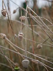 Overcast Evening - First Day Of Autumn 2016 (daveumich) Tags: autumn seasons fennernaturecenter michigan outdoors