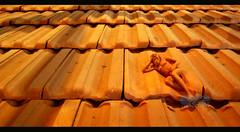 Kochi-Muziris Biennale 1 (Renjith C R) Tags: roof red india man hot film face lady super kerala biennale kochi