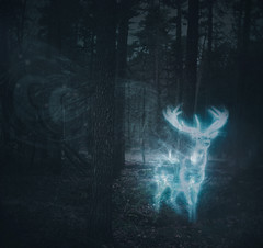 7/365 (daphne og.) Tags: forest photoshop project photography woods harrypotter surreal days deer 365 magical patronus