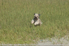 """Wild Frolic Dog Beast • <a style=""""font-size:0.8em;"""" href=""""http://www.flickr.com/photos/56545707@N05/8363690433/"""" target=""""_blank"""">View on Flickr</a>"""