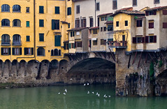 """Florence, seagulls on the river"" (pigianca) Tags: italy seagulls water colors architecture florence italia fiume firenze arno acqua colori architettura gabbiani pontevecchio riverarno fujix100"