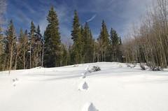 Follow your Footsteps IMGP8042 (dawn.parker73) Tags: winter snow colorado treeline