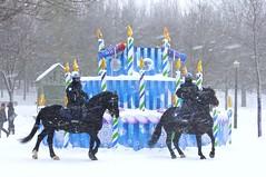 La Cavalerie   la 30e Fte des neiges de Montral 2013 (Pierre thier) Tags: cheval montral montreal paysage d300s
