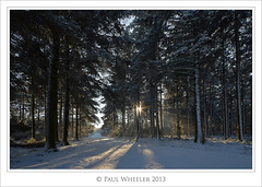 Winter Wonderland! (Paul_Wheeler) Tags: wood trees winter england white snow sunshine britain path devon dartmoor spruce hdr bellever