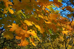 October (Liisamaria) Tags: foof tude beautifulearth naturelandscape amazingnature mywinners heartsofoak heartawards therubyawards ruby5 coloremiomondo lamiasonata beautifulpicsofourfriends