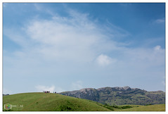 Vagamon Meadows (Madhu P. Nair Photography) Tags: india green nature landscape photography meadows kerala p madhu nair kottayam idukki vagamon madhupnairphotography vagamonmeadows