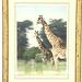 20. Limited Edition Artist Signed Giraffes Print