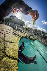 Teasing the penguin (Chad Powell Design and Photography) Tags: sky sun bird canon penguin angle fisheye lensflare isleofwight flare 365 seaview samyang 365challenge 365daychallenge samyang8mm canon550d canont2i