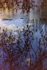 dutch winter (2) (bertknot) Tags: winter reflections reflecting mirror dutchwinter mirroring weerspiegeling dewinter winterinholland reflecties weerspiegel winterinthenetherlands hollandsewinter winterinnederlanddutchwinter