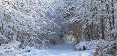 Winterzauberwald (Karamellzucker) Tags: schnee winter wonderland wald zauberwald johanniskreuz