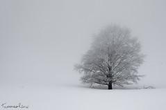Winter Blossom (Tommaso Renzi) Tags: winter white snow storm neve bianco faggio parconazionaledabruzzo beench lazioemolise