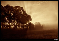 Golden Morning (mynewpicture) Tags: fog sunrise kentucky rays mygearandme mygearandmepremium mygearandmebronze mygearandmesilver mygearandmegold photographyforrecreationeliteclub klausficker