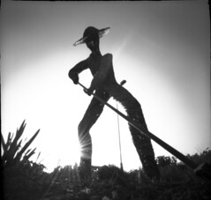 Law of sowing and reaping (a.ellis) Tags: sunset garden exposure 2000 centre 4 pinhole 150 flare 100 rodinal zero seconds acros dobbies 13m30