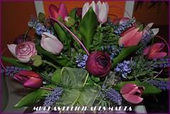 FELIZ CUMPLEAOS (Buscavientos) Tags: espaa flores amiga asturias marta cumpleaos comunidadvalenciana felicidades btera ablana