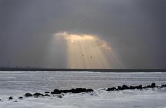 in the spotlight (mariecarlssonramirez) Tags: ocean winter sea sky sun snow bird ice nature water beautiful rock stone landscape europe sweden horizon malm