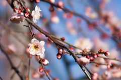 hanegi_park-095 (t.nanba) Tags:   dslra900  900