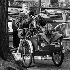 Amsterdam, Herengracht (Bart van Dijk (...)) Tags: city urban bw dog man netherlands monochrome amsterdam blackwhite zwartwit nederland citylife streetphotography hond squareformat dailylife singel stad zw stadsarchief monochroom peopleinthecity straatfotografie peopleinthestreets straatnamen dagelijksleven mensenopstraat stadsleven peopleinamsterdam stadsarchiefamsterdam canoneos7d mensenindestad vierkantformaat 11format bartvandijk breeblebox menseninamsterdam canonef24105f40l cityarchivesamsterdam