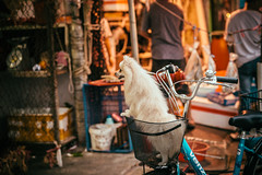 Basket Pup (candersonclick) Tags: china vacation hongkong asia honeymoon lily streetphotography kowloon fishingvillage 2012 lantauisland lantau taio nikond600 tankavillage