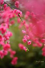 (Jennifer ) Tags: flowers flower macro nature closeup nikon taiwan plumblossoms