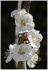 spring:on #4 (ant_94) Tags: flowers sun nature spring nikon colore earth natura ombre land fiori sole terra piante colori pachamama fioritura sbocciati fruttidellaterra