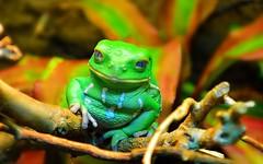 Frog-001 (chefdrew1) Tags: mygearandme me2youphotographylevel2 me2youphotographylevel3 me2youphotographylevel1 me2youphotographylevel4