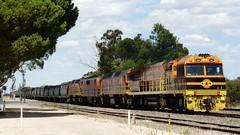 big and little, new and old (sth475) Tags: railroad autumn train clyde gm diesel railway loco australia bulldog locomotive sa veteran ac ge freight emd gwa 2207 2216 coonalpyn uglr 22class cabunit gm42 gm12class j26c c44aci a16c gwu007 gwuclass