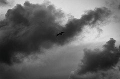 Death Is Imminent (Mathias Bra) Tags: blancoynegro cielo nubes gaviotas