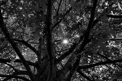 Hide and seek with the sun (Sky_PA (Catching up slowly- On/Off)) Tags: sun lightandshadow darkness light tree shadow monochrome blackandwhite amateurphotography beautiful canon t6i rebelt6i canoneos inspiredbylove leaves nature outdoors outdoor pennsylvania quote summer stoeversdampark lebanonpa