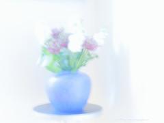 _B5A6455REWS In Essence,  Jon Perry, 18-6-16 zav (Jon Perry - Enlightenshade) Tags: jonperry enlightenshade arranginglightcom 18616 20160618 vase blue bluevase dream essence beginnings perception pastel pale bright