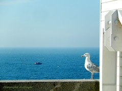 Le regard de la mouette (FleurdeLotus28) Tags: fcamp normandie normandy seinemaritime water mer ocan ocean oceanside landscape littoral nature line ligne t summer france blue bleu mouette bird oiseau digue nikon