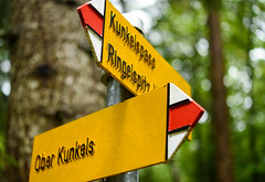 Kleine Rundtour am Kunkelspass (balu51) Tags: ausflug spaziergang wald wegweiser gelb grn regen regentag kunkelspass graubnden september 2016 copyrightbybalu51