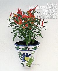 maceta | flower pot (Madrid | Spain) Tags: maceta flores flowerpot servivo planta decoracion