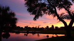 Sunset August 21, 2016 (Jim Mullhaupt) Tags: sunset sundown dusk sun evening endofday sky clouds color red gold orange pink yellow blue tree palm silhouette weather tropical exotic wallpaper landscape nikon coolpix p900 pond lake water reflection manateecounty bradenton florida jimmullhaupt cloudsstormssunsetssunrises photo flickr geographic picture pictures camera snapshot photography nikoncoolpixp900 nikonp900 coolpixp900 summer