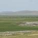 A Mongólia possui 50 milhões de animais