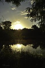 tang Molsheim,  France. (boomer_phil) Tags: reflets soleil arbres couleurs nikon d500 ciel nuages