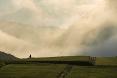 1349 (Keiichi T) Tags: ricefield  eos morninghaze 6d mountain green   fog  shadow  canon haze       silhouette  morning japan  people light sunrise